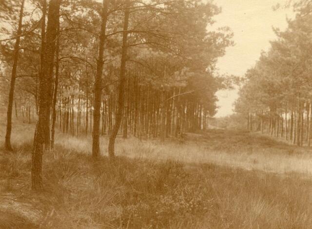 600782 - Landschap in de omgeving van Loon op Zand. Duinen en bossen.Kasteel Loon op Zand. Families Verheyen, Kolfschoten en Van Stratum