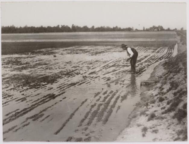 040831 - Werkverschaffing voor werklozen. Bevloeiing van een pas aangelegd drainageveld Loon op Zandseweg.  De vloeibaas egaliseert voor 't laatst voor de inzaaiing nog zoveel mogelijk voor een regelmatige vuilwaterverdeling over het 1 ha groot zijnde veld.