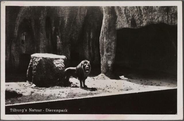 010788 - Dierentuin. Het leeuwenverblijf in  het Tilburg's Natuur Dierenpark aan de Bredaseweg.
