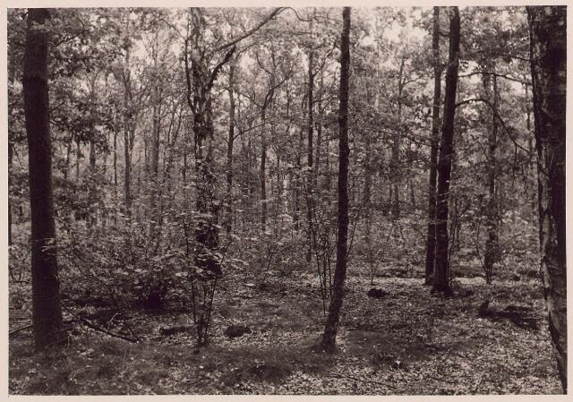 027859 - Oude Warande, gemengd bosch