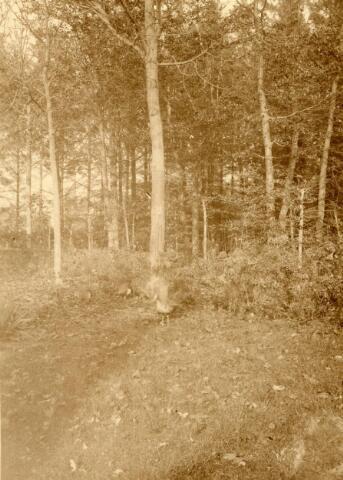 600753 - Landschap in de omgeving van Loon op Zand. Duinen en bossen.Kasteel Loon op Zand. Families Verheyen, Kolfschoten en Van Stratum