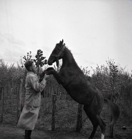 654783 - Man met paard