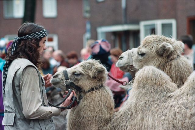 1237_010_753_014 - Intocht Sinterklaas (kamelen).