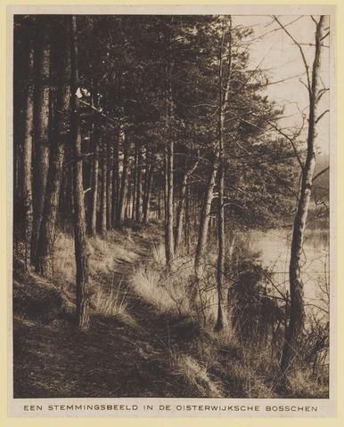 075369 - Serie ansichten over de Oisterwijkse Vennen.  Ven: Stemmingsbeeld in Oisterwijkse bossen.