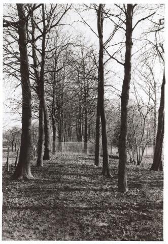 023959 - Ongerepte natuur in de Koningshoeven omstreeks 1975
