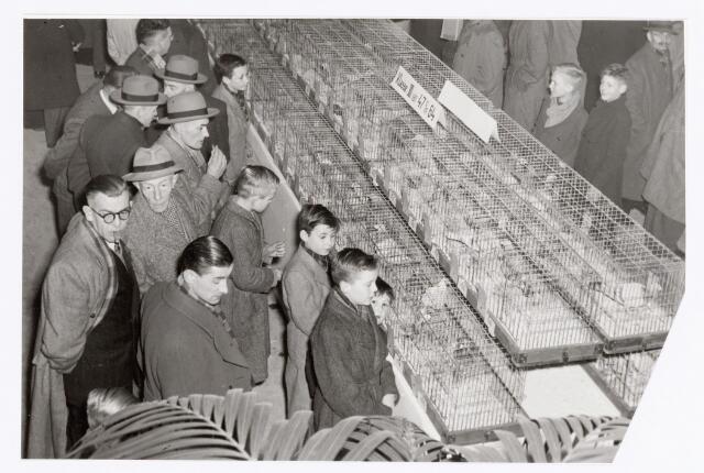 038776 - Volt Zuid. Sport en ontspanning. Tentoonstelling van de postduiven-vereniging P.V. de Voltvliegers in februari 1953.