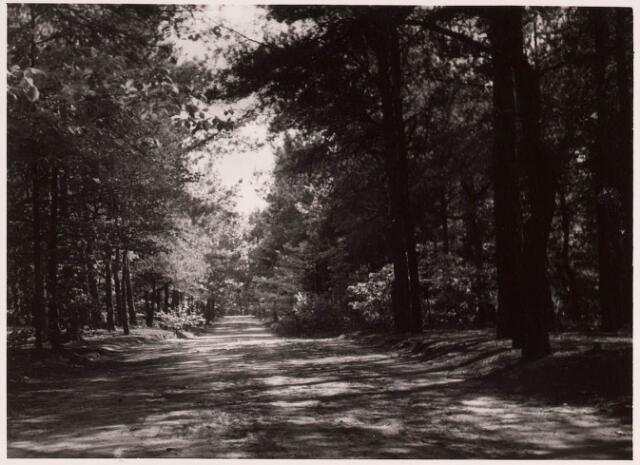 034232 - Wandelbos met vijver met brug in het wandelpark