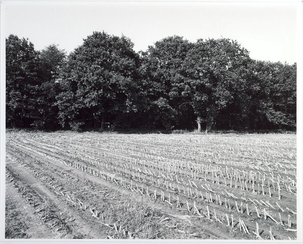 015436 - Landschap. Fase I de Blaak