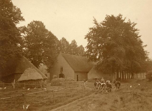 600841 - Harrie en Jana van Loon brengen de koeien naar huis.  Families Verheyen, Kolfschoten en Van Stratum