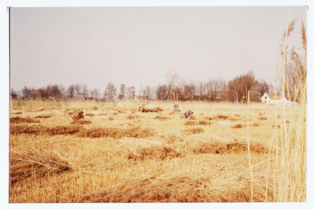 063710 - Het snijden van riet nabij Mie Pieters aan de Laag Heukelomseweg te Heukelom thans gemeente Oisterwijk