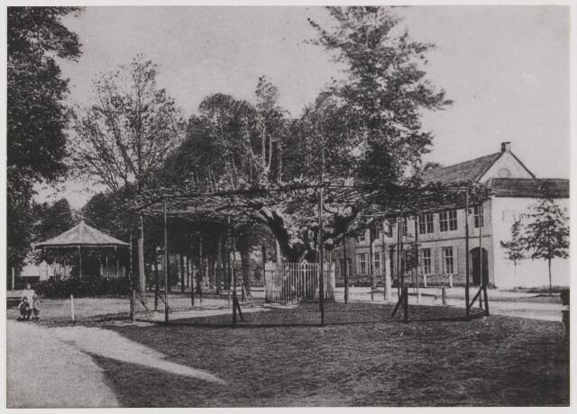 077973 - Oude lindeboom. Bij de komst van de Fransen, in 1795, werd vóór het raadhuis een vrijheidseik geplant. Hij staat er nog, als enige in ons land.