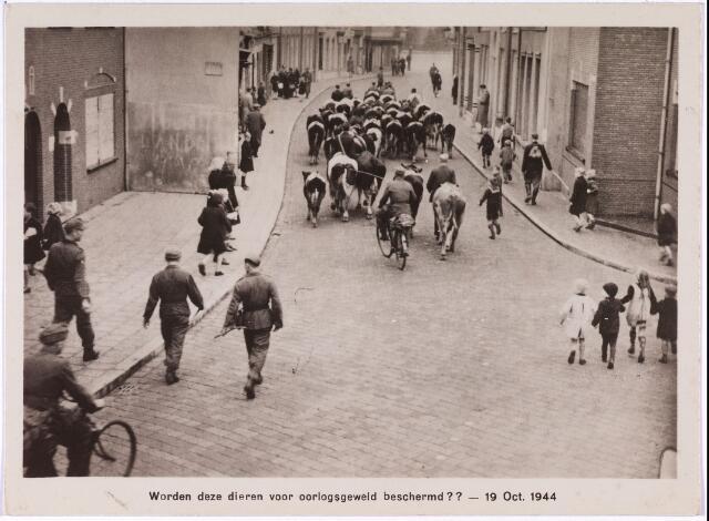 013172 - Tweede Wereldoorlog. Duitsers drijven vee door de Kerkstraat naar de Markt. Vandaar ging het richting noorden naar Oudewater. De koeien waren gevorderd van boeren uit de omgeving van Oosterhout.