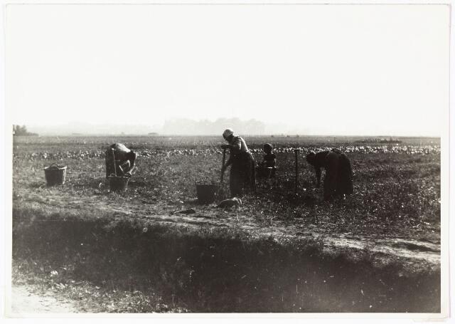 008482 - Aardappelrooien aan de Bredaseweg door fotograaf Henri Berssenbrugge (1873-1959) in 1903.