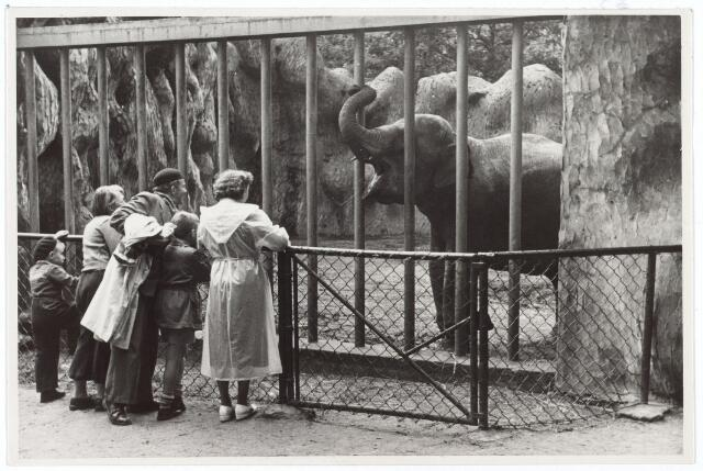 016241 - Dierentuin. Bezoekers bij de olifanten in het dierenpark aan de Bredaseweg. Oorspronkelijk heette het Burgers Dierenpark en werd later overgenomen door de firma Van Dijk. In augustus 1973 werden de poorten gesloten