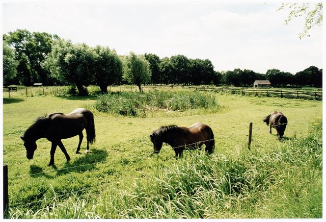 039906 - Paarden in een weiland nabij het Grollegat.