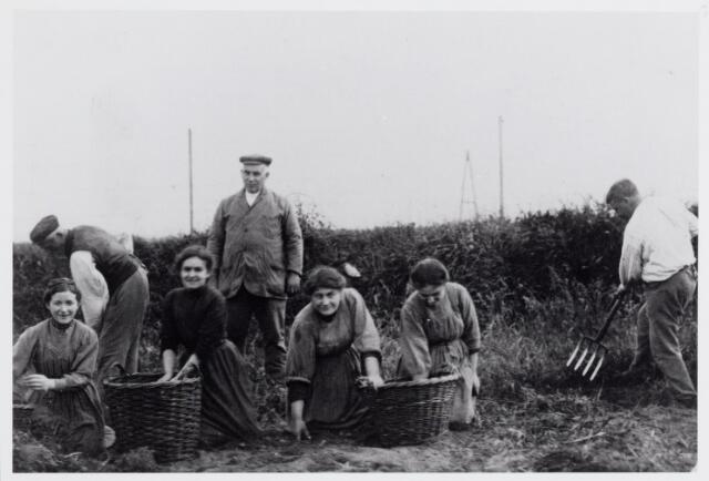 045790 - Personeel van de firma H. van Puijenbroek uit Goirle bezig met het rooien van aardappelen op het terrein van de voornoemde firma 'achter Kies' onder de gemeente Hilvarenbeek. Van links naar rechts Klara Boomaars-van der Weegen, staande N.N., Tina van de Ven-Stockermans, staande Tinus Stockermans, Cato van Puijenbroek-Eijsermans, Bertha van Beurden-Eijsermans en staande met riek N.N.