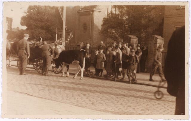 013190 - WO2 ; WOII ; Tweede Wereldoorlog. Terugtocht. Tijdens hun terugtocht inseptember 1944 roofden de Duitsers op de Broekhovensweg nog een kalf. ' Cowboys te voet'  luidt de bijnaam voor de plunderende militairen