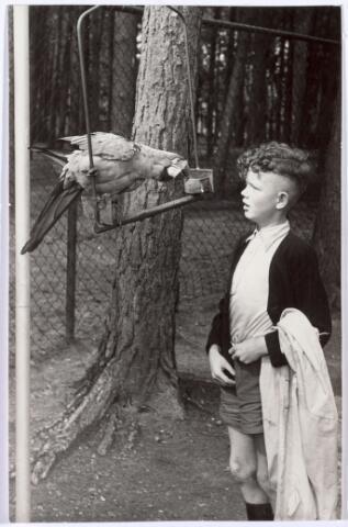 016234 - Dierentuin. Jeugdige bezoeker van het dierenpark aan de Bredaseweg in 1952. Oorspronkelijk heette het Burgers Dierenpark en werd later overgenomen door de firma Van Dijk. In augustus 1973 werden de poorten gesloten. Jongen met papagaai.