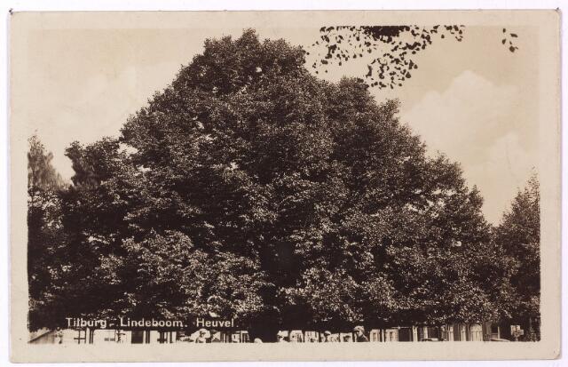000940 - Lindeboom op de Heuvel.