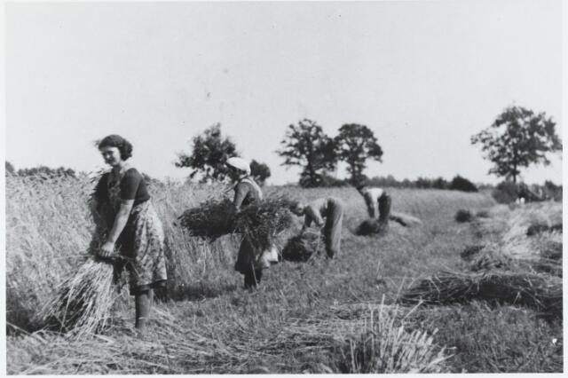 055594 - Landbouw. Het oogsten van het graan. Het graan werd al met de machine gemaaid door Harrie van Gisbergen. Bezig met binden v.l.n.r: Greta, Trees, Charles en Kees van Gisbergen.