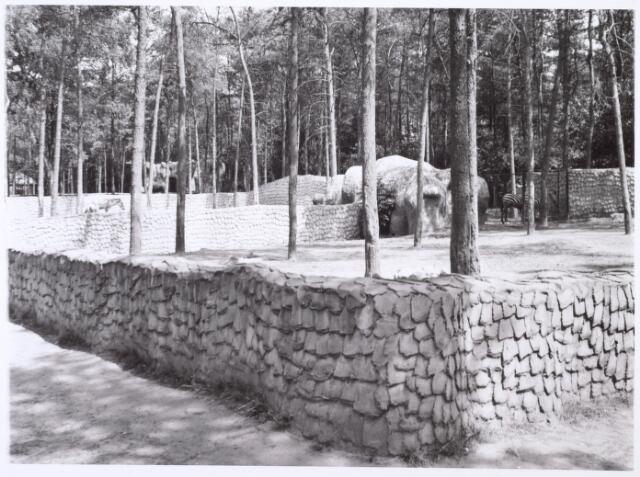 016275 - Dierentuin. Zebra´s en ezels in het dierenpark aan de Bredaseweg. Oorspronkelijk heette het Burgers Dierenpark en werd later overgenomen door de frima Van Dijk. In augustis 1973 werden de poorten gesloten