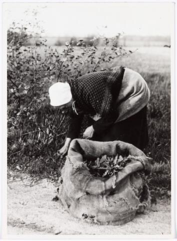 008541 - Vrouw die konijnenvoer zoekt, gefotografeerd door Henri Berssenbrugge (1873-1959).