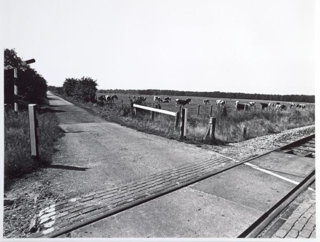 015331 - Landschap. Omgeving van de voormalige spoorlijn Tilburg - Turnhout, in de volksmond ´Bels lijntje´ genoemd
