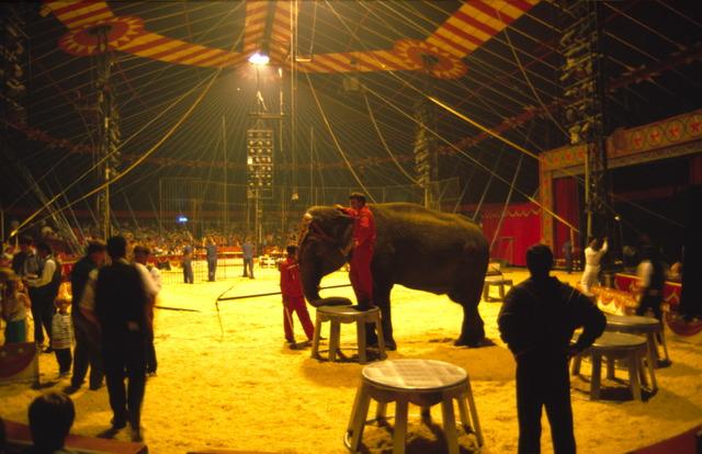656899 - De piste van American Circus op het Laarveld in Tilburg. Act met olifanten.