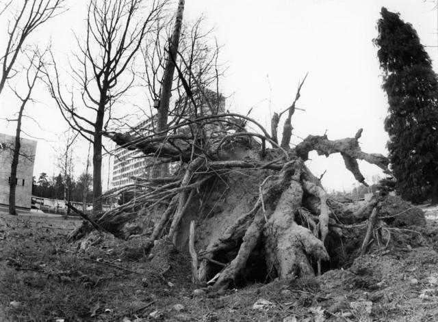 1238_F0183 - Omgewaaide boom op het terrein van Universiteit Tilburg