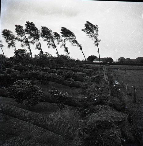 654682 - Persfoto. Omgewaaide bomen na hevige storm.