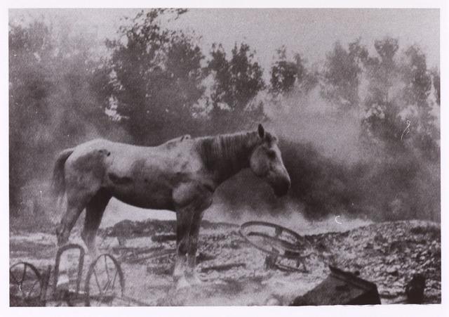 013417 - WOII; WO2; Tweede Wereldoorlog. Een paard staat verloren tussen de puinhopen na een Duits bombardement