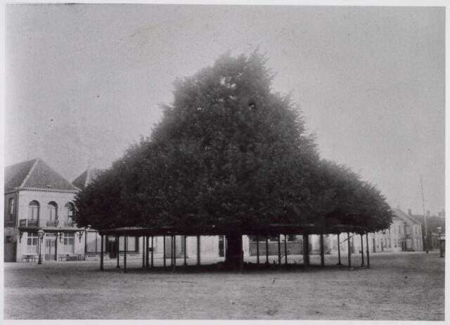 021364 - De lindeboom anno 1892. Links op de achtergrond De Looiersbeurs