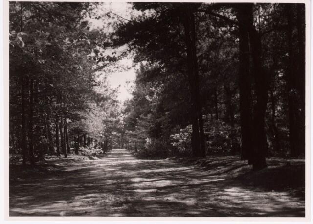 034231 - wandelpad in het Wandelbos