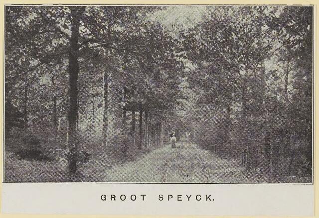 073524 - Oisterwijk Bosgezichten Groot Speyck