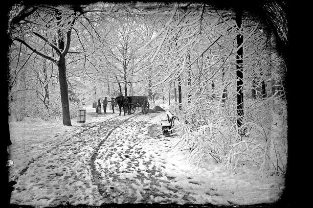 654121 - Winter in het Wilhelminapark.