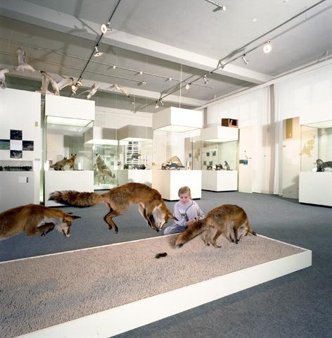 D-000611-1 - Noordbrabants Natuurmuseum