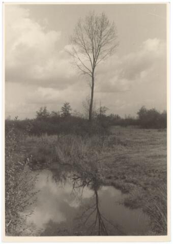016769 - De Buunder.