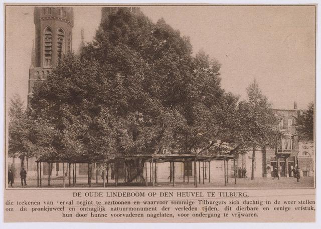 021369 - Getuige de tekst bij deze foto uit een tijdschrift vertoonde de lindeboom al in 1917 tekenen van verval.