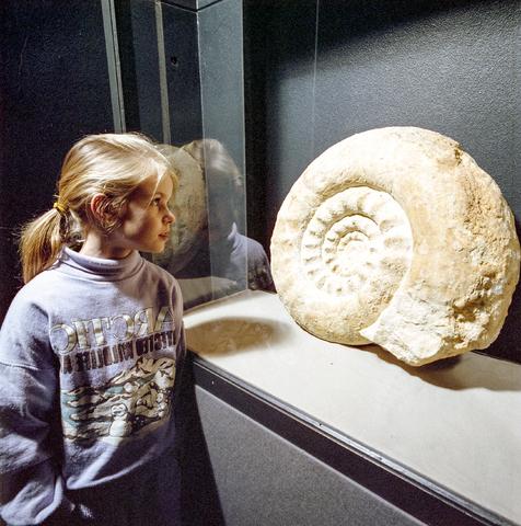 D-000611-2 - Noordbrabants Natuurmuseum. Meisje bij fossiel