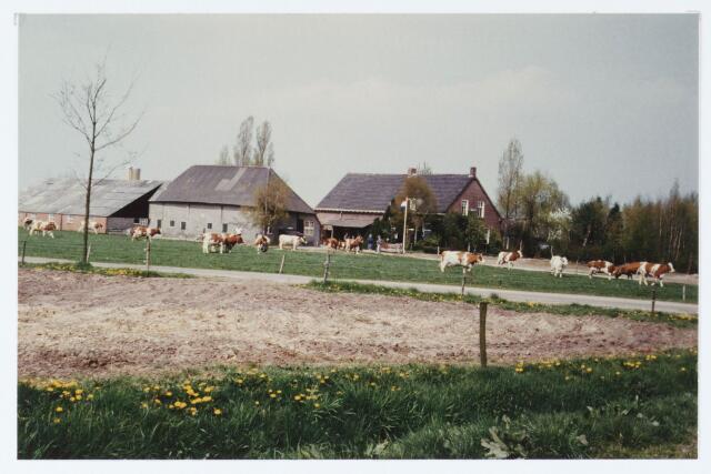 062421 - In het voorjaar van 1984 gingen de koeien bij de boerderij van R.v.d. Loo aan de Akkerweg 11, thans Heikantsebaan 9a. voor het eerst naar buiten