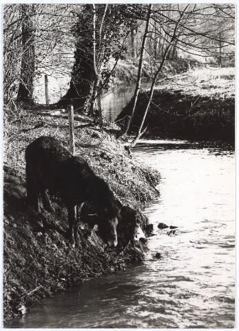 023965 - Het riviertje De Leij ter hoogte van Koningshoeven