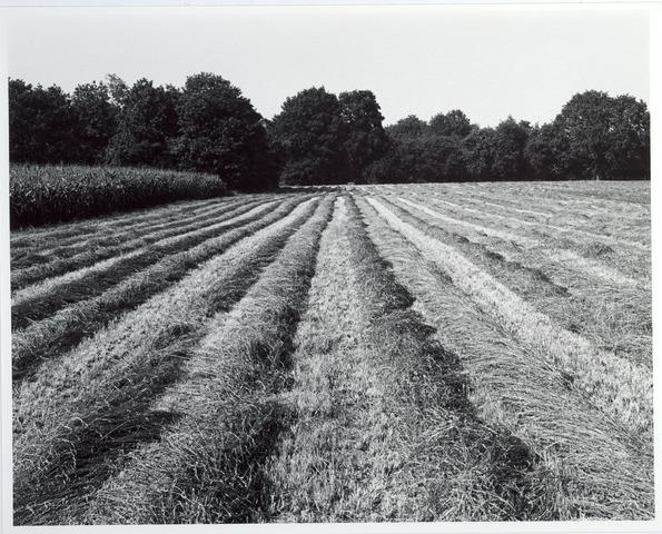 015423 - Landschap. Fase I de Blaak