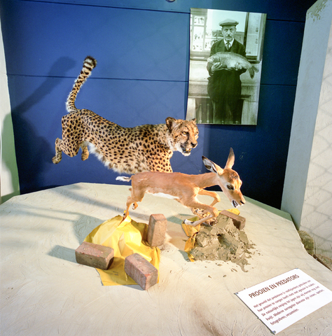 D-000951-1 - Noordbrabants Natuurmuseum, Spoorlaan: Expositie 'Het beest in de mens', 1997