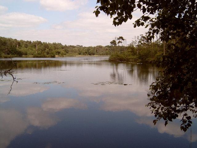 657193 - Natuur. De Oisterwijkse bossen en vennen.