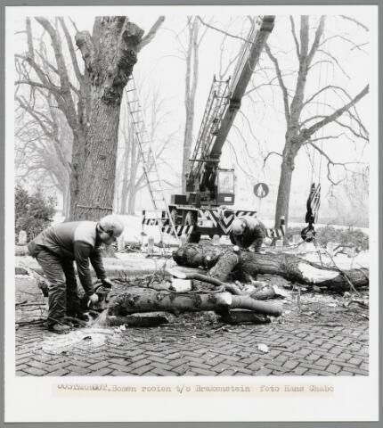 102678 - Het rooien van bomen.