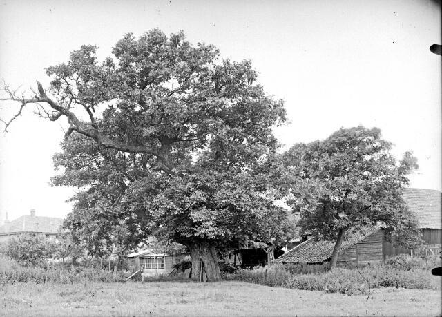 650586 - Schmidlin. De notenboom bij de gelijknamige boerderij van de familie de Brouwer aan de President Steijnstraat, omstreeks 1935