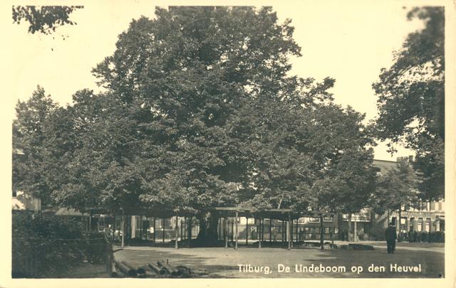 653924 - Tilburg. Ansichtkaart van de (oude) Lindeboom op de Heuvel voor de St. Josephkerk.