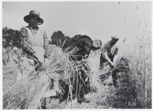 055586 - Landbouw. Oogstveld met v.l.n.r: Jans de Kort (1905-1993), broeder Jonathus (Martinus) de Kort (1903-1976) en Jan de Kort (1889-1975).