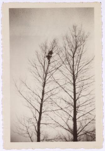 013232 - WO2 ; WOII ; Tweede Wereldoorlog. Bevrijding.  Uitkijkpost in de omgeving van de Leij. Vanuit deze boom kon men een groot gebied overzien en belangrijke informatie doorspelen aan de geallieerden