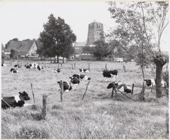 102346 - Landbouw. Landelijk tafereel in het huidige centrumgebied gelegen tussen de Strijenstraat en de Bakkerstraat.(thans vol gebouwd)